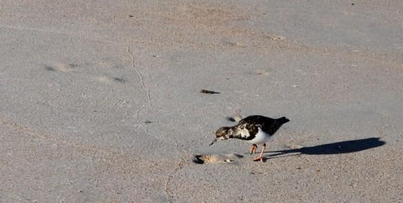 Same bird, different angle.