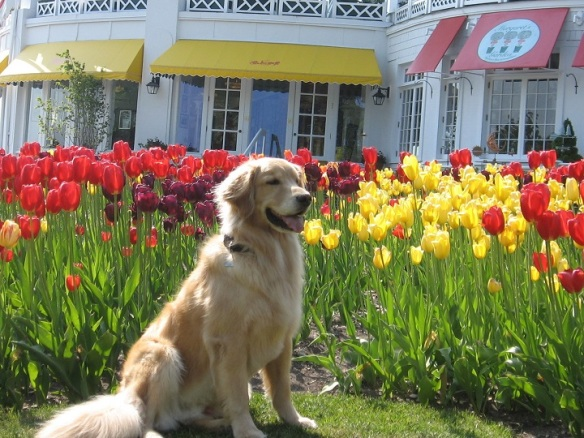 Tulips, Bear, and the Grand Hotel