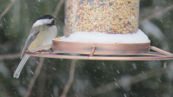 This little Chickadee is lucky to have friends on the island . . . like Clark Bloswick!