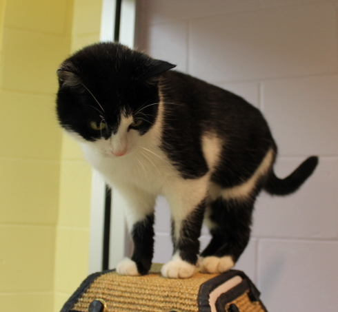 Little Crossfire from last week has been ADOPTED!!