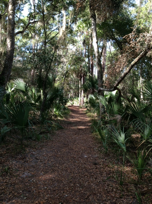 The shady walk through the plantation grounds to the burned ruins of the sugar mill.