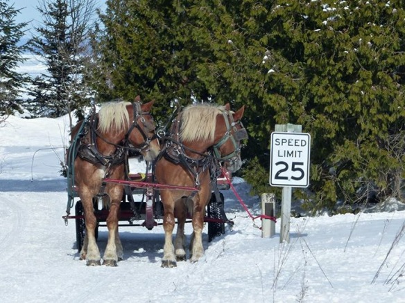 """In the category of """"only on Mackinac""""!  Awesome photo from Robert McGreevy."""
