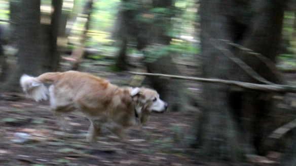 Doing what he loves best - racing through the Mackinac woods.