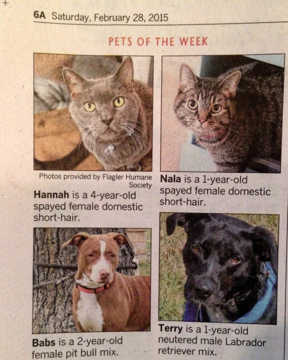 So excited yesterday to open The Flagler/Palm Coast News-Tribune and find they'd used my photographs of Hannah and Nala in their Pets of the Week segment.  Hoping these two kitties, as well as sweet Babs and Terry get their forever homes soon.