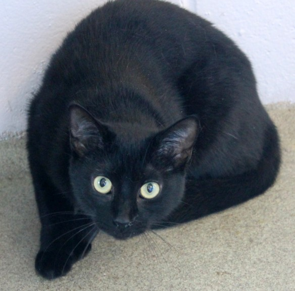 Little 6-month-old Summer, who was VERY skittish.  She needs a lot of loving so she won't be so afraid of people.