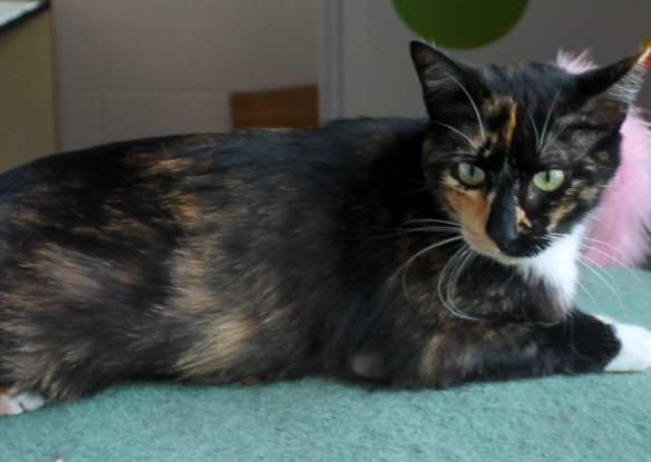 Little 5-year-old Thelma has very distinctive face markings.