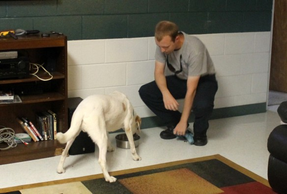 Gibbs has the full run of the fire station and loves to hang out  . . .