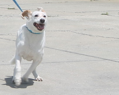 That's one happy hound!