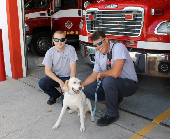 Here with volunteer Seth Carey and firefighter Andy Thomas, Gibbs has come a long way from the sad-eyed dog I photographed a few months ago.