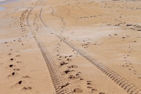 For the first times yesterday we saw tire tracks on the sand, and we didn't have to walk much further to discover why.
