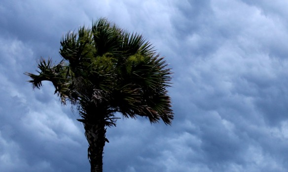 Every afternoon the sky darkens, the palm trees begin to sway . . .