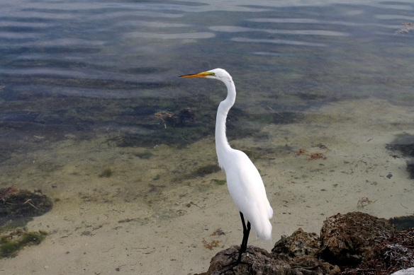 There were other seabirds waiting for hand-outs . . .