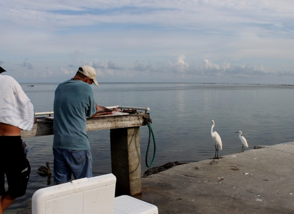 The kids had towed their boat down from Ormond Beach and had chosen Breezy Palms because they could tie up at the dock there.  We walked down to the dock to wait for them to come in and watched fishermen cleaning the day's catch . . .