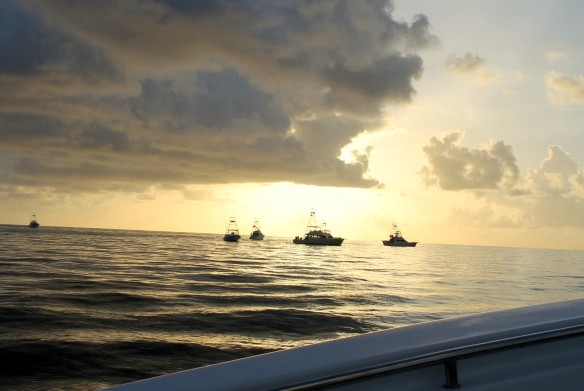 . . . and several miles out to sea.  We came upon our first group of boats - all stopped to catch bait fish.