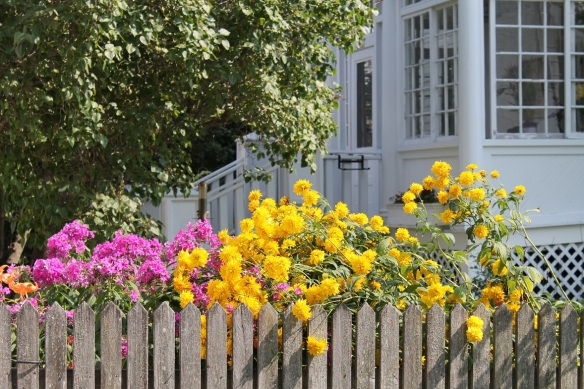 Love these flowers along the fence . . .
