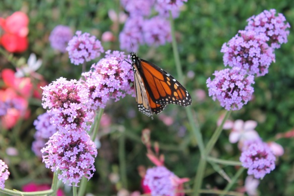The Monarchs seemed to approve also.