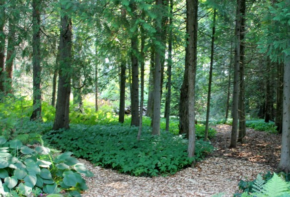 . . . a shade garden of ferns, ground cover, and foliage so green you can literally smell the richness of the earth it covers.