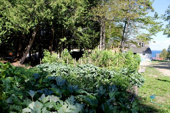 While all this is going on, Liz has been using some of the back acreage to grow vegetables . . .