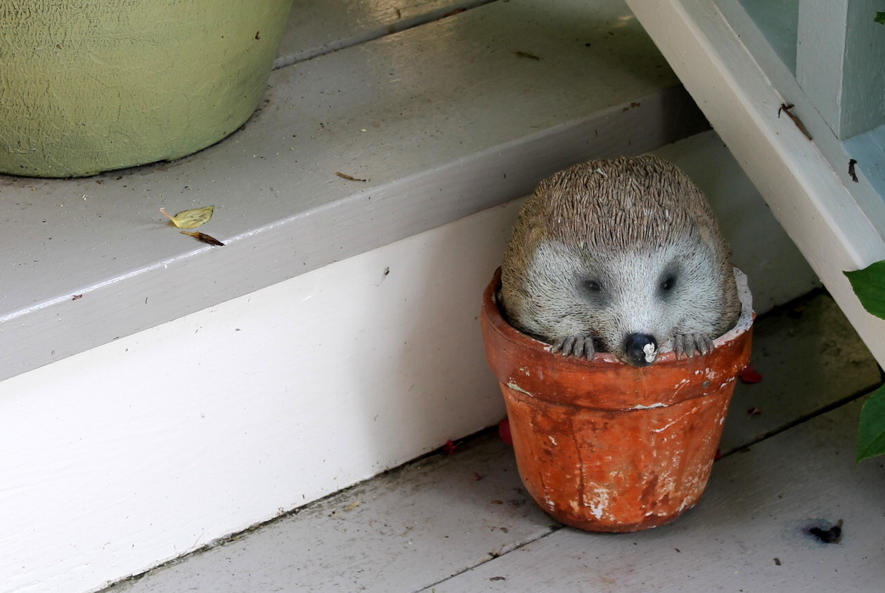 And my personal favorite - a little hedgehog hiding in a flower pot.