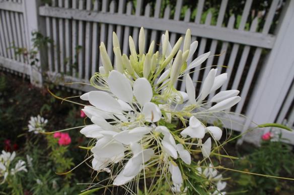 Grand Hotel garden flower.