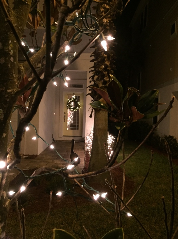 . . . and for the first time ever, we used net lights over the shrubbery and accented our magnolia tree with white lights.