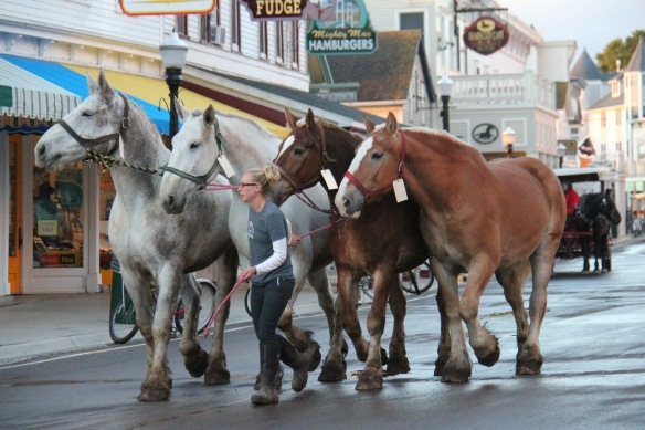 From a photographer for Joanne's Fudge: Another group of horses leaving for winter pastures in the U.P.
