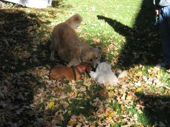 The Dog-Eared Page: Maddie and Bear playing with Buddy, an island friend.